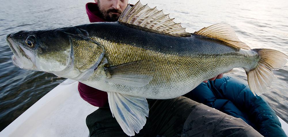 Fiskeäventyr med guide i Stockholms Skärgård Image